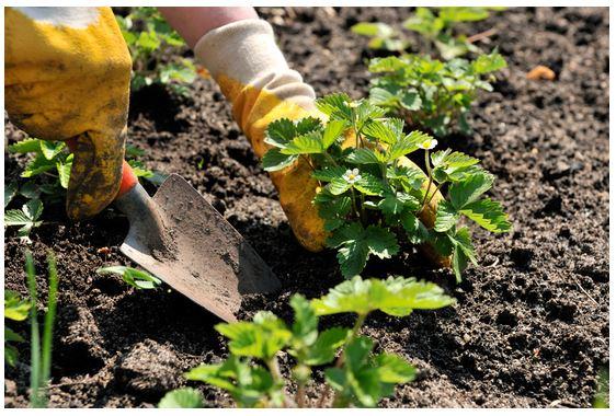 Κηπουρική < Συμβουλές - Προτάσεις | Antemisaris